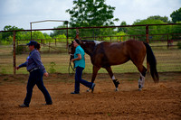 Bexar County 4-H Horse Leaders Clinic